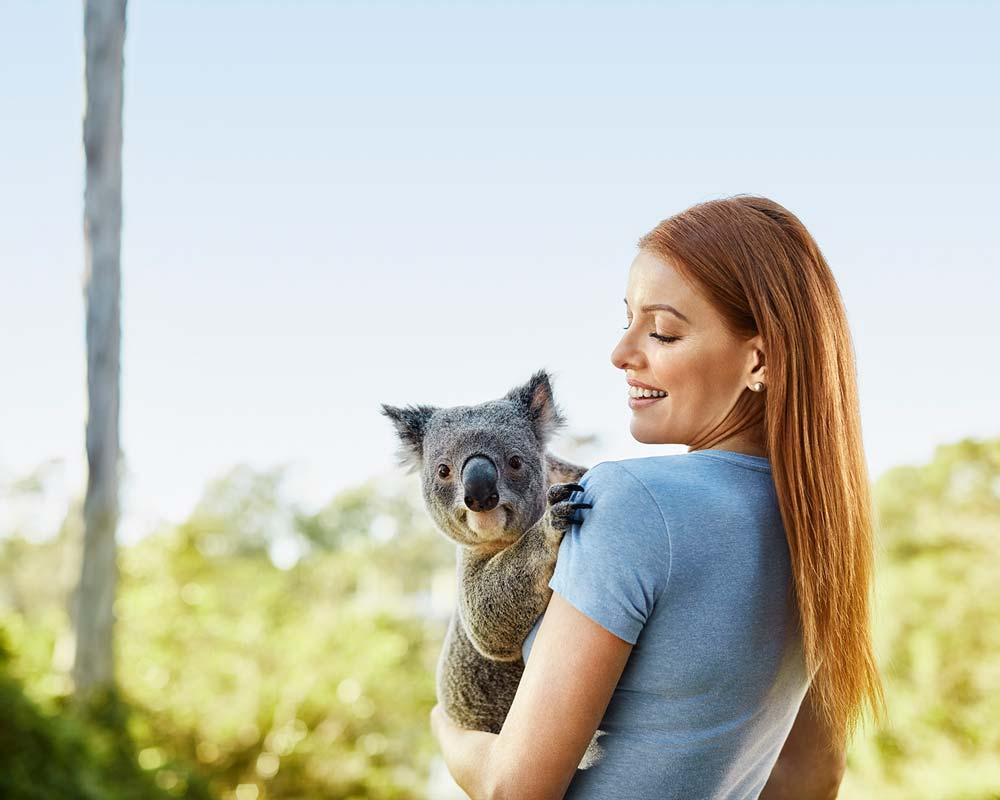 Koala Queensland
